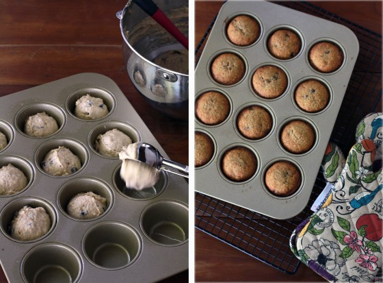 Light Wheat Banana Muffins with Chocolate Chips via www.mylifeasamrs.com